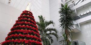 Árvore de Natal da Masipack ganha fotos dos colaboradores